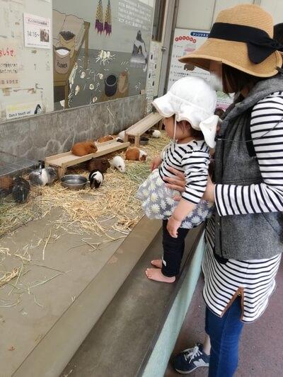 GW1週間前千葉市動物公園混雑