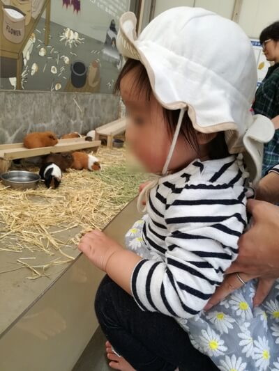 2019GW1週間前千葉市動物公園混み具合